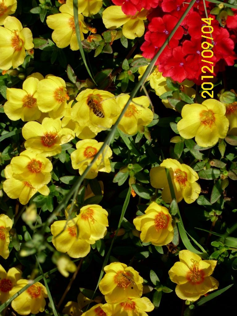 moje cvijeće,vrt