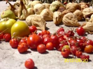 pomidore1