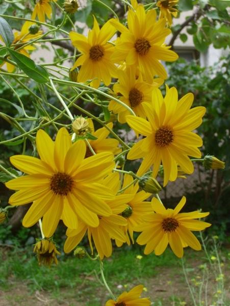 cvijece,vrt