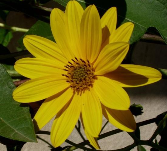 cvijeće,vrt