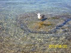 more dalmacija