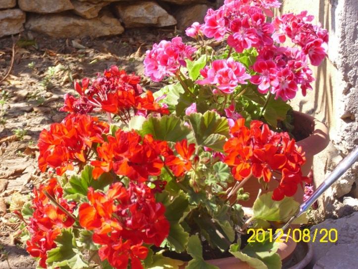 cvijeće zlarin