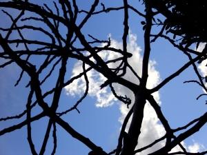 oblaci u granama...