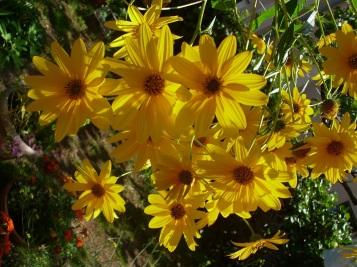 Moje cvijeće