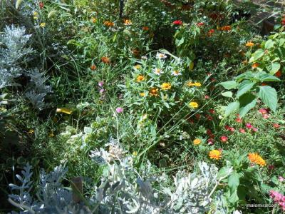 Moj vrt