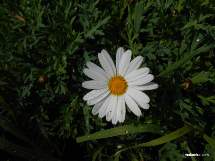 moj_vrt
