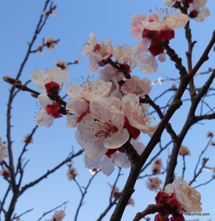 proljeće