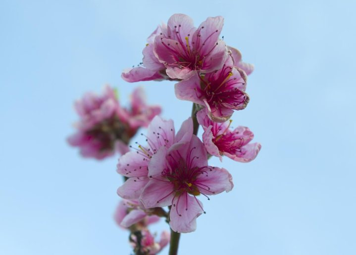 Proljece_001