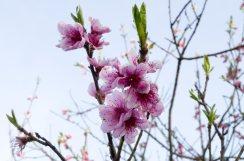 Proljece_002