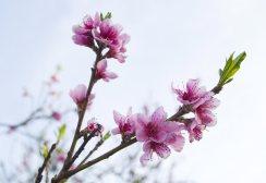 Proljece_003